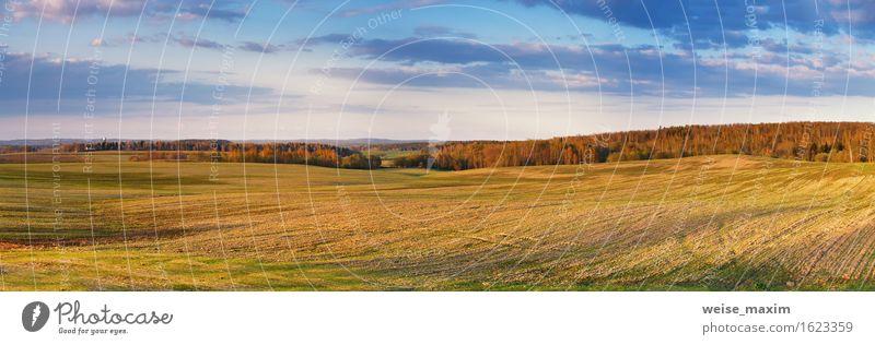 Sonnige Frühlingsfelder am Abend Himmel Natur blau grün schön Sommer Landschaft Wolken Wald Umwelt gelb Wiese Gras braun hell