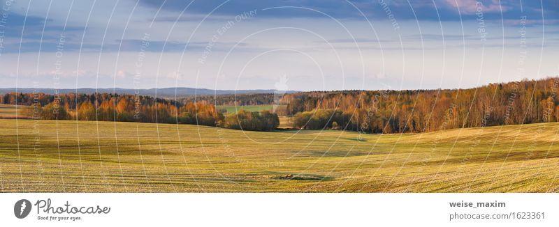 Sonniges Feld im Frühjahr schön Sommer Natur Landschaft Himmel Wolken Frühling Schönes Wetter Gras Wiese Wald Hügel Wachstum hell blau braun gelb grün