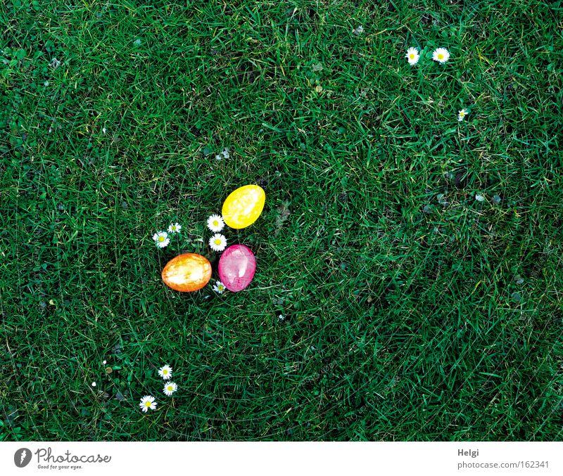 Eier suchen... Natur weiß grün Pflanze Blume Freude gelb Wiese Gras Frühling Garten Feste & Feiern liegen rosa Lebensmittel 3