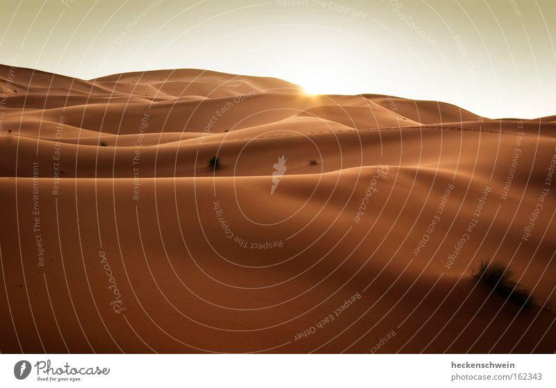You are here Sonne Gras Wärme Sand Horizont Erde leer Afrika Wüste Vergänglichkeit heiß Sonnenuntergang trocken Düne Klimawandel Ödland