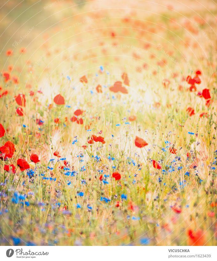 Feld mit Mohnblumen und blauen Kornblumen Lifestyle Design Sommer Umwelt Natur Landschaft Pflanze Herbst Schönes Wetter Blume Wiese Wiesenblume Stimmung