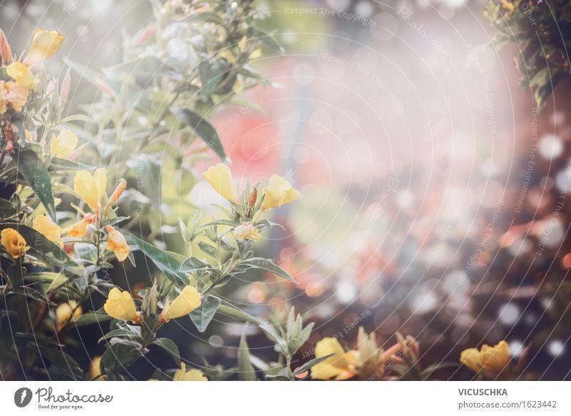 Gelbe Blumen über Garten Hintergrund. Stil Design Sommer Natur Pflanze Erde Sonnenlicht Frühling Herbst Schönes Wetter Gras Sträucher Blatt Blüte Park Blühend