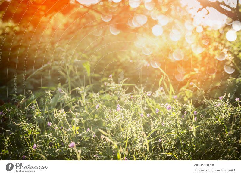 Sommer Natur mit Gras , Wildblumen und Sonnenuntergang Lifestyle Design Garten Umwelt Landschaft Pflanze Sonnenaufgang Sonnenlicht Frühling Herbst