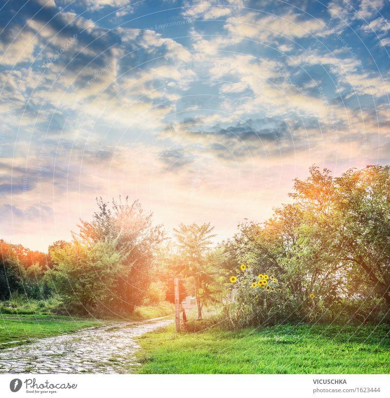 Sommer Natur. Sommer garten Himmel Ferien & Urlaub & Reisen Pflanze Baum Blume Landschaft Umwelt gelb Herbst Wege & Pfade Gras Stil Lifestyle Garten