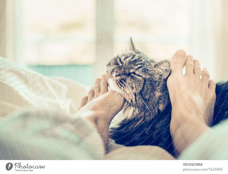 Mit Katze im Bett scmusen Lifestyle Stil Häusliches Leben Schlafzimmer Mensch Frau Erwachsene Fuß Haustier 1 Tier retro Erholung Kuscheln Fenster Freude