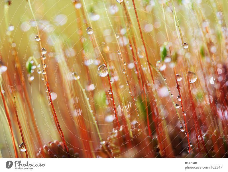 twinkling moss Natur schön Pflanze rot Sommer ruhig Erholung Herbst Frühling glänzend Umwelt Wassertropfen nass frisch Dach zart