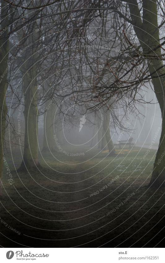 Nebel ist der Weichzeichner der Natur Natur Baum Wald Frühling Wege & Pfade Landschaft Stimmung Nebel Spaziergang weich Fußweg mystisch Allee Geäst