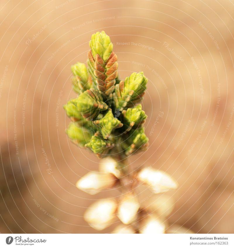 Neustart Natur Blume grün Pflanze Wiese Frühling braun Beginn Wandel & Veränderung Spitze Friedhof Topfpflanze winterfest