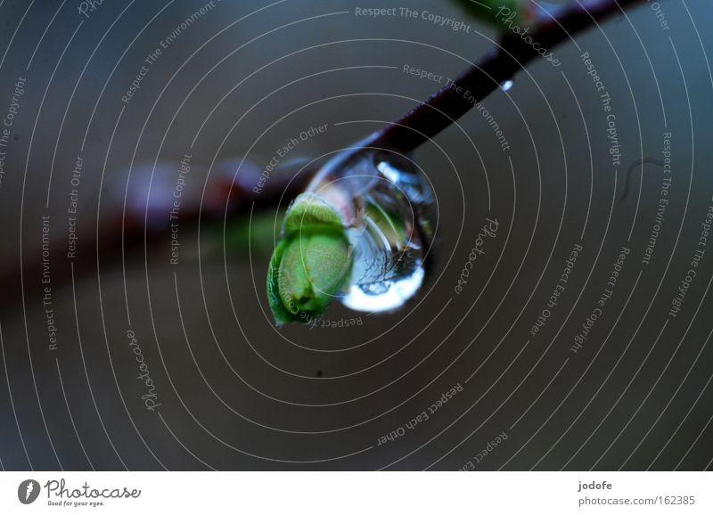 Regentropfen Natur Wasser Pflanze Frühling Wassertropfen trist Ast Botanik Zweig Blattknospe Reflexion & Spiegelung Blattgrün Lupeneffekt