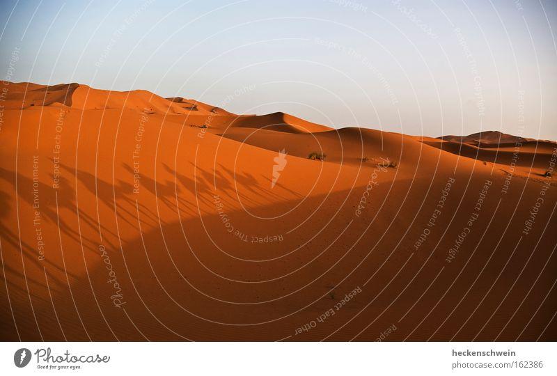 Walking on a dune shadow Einsamkeit Sand Suche Horizont Erde leer Ziel Afrika Wüste heiß trocken Düne Orientierung Kamel Sahara Karavane