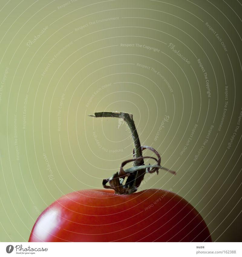 Herr Tom Ate grün rot Gesundheit natürlich Lebensmittel authentisch frisch Ernährung Kochen & Garen & Backen Gemüse lecker Bioprodukte Diät Tomate Fasten Vitamin