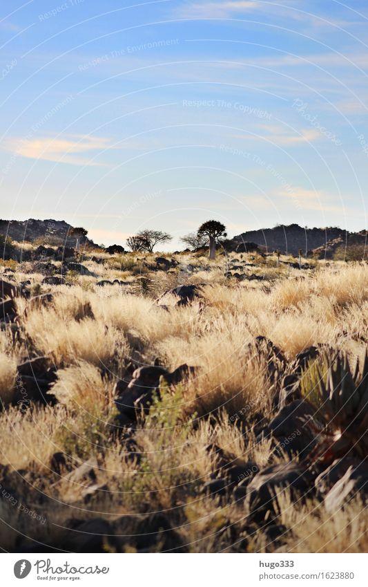 Endless Wilderness Natur blau Pflanze Landschaft Umwelt gelb Wärme Gras braun Felsen Horizont Erde gold Sträucher Schönes Wetter Hügel