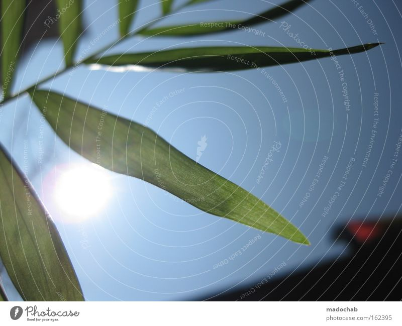 frühlingserwachen Himmel Frühling Sonne Pflanze Blatt Leben Wunsch Freude Balkon streben Wachstum aufwachen Neuanfang blau grün
