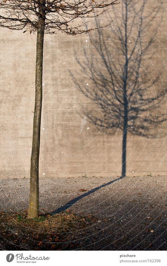 Der Schatten seiner selbst Natur Stadt Baum Einsamkeit Herbst Wand Beton Vergänglichkeit Baumstamm kahl