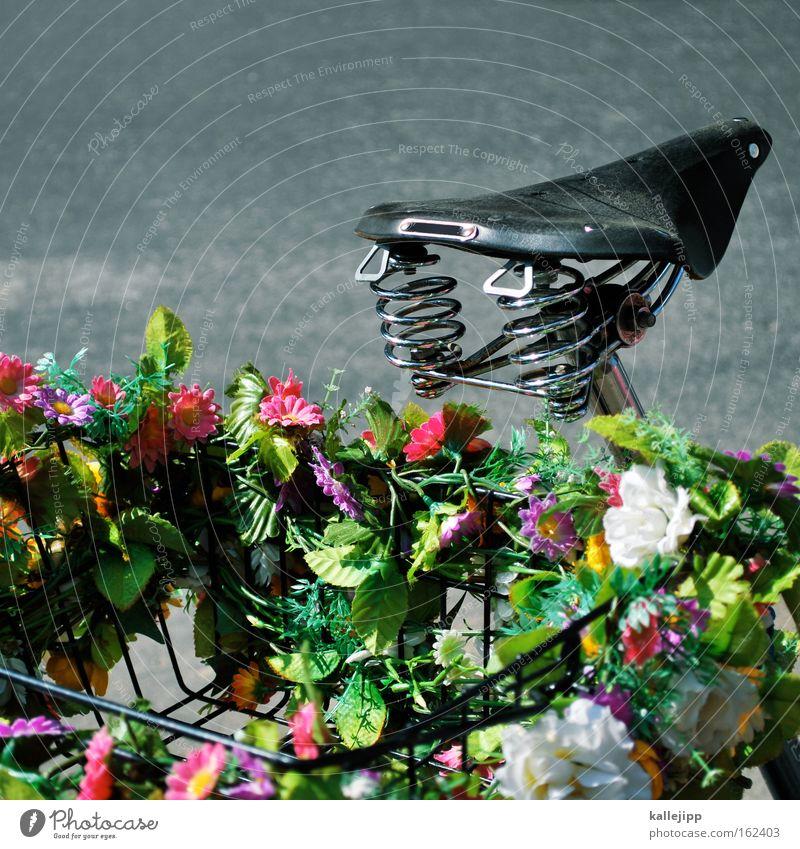 fahrt ins grüne Fahrradsattel Sattel Blume Metallfeder Dekoration & Verzierung Korb Straße Straßenverkehr Vatertag Ausflug Frühling Wachstum Blüte