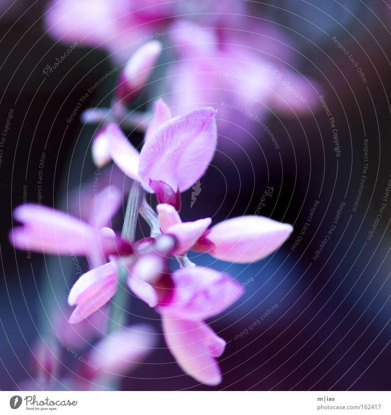 ..und draußen ein Gewitter Blume Blüte violett rosa zart Frühling Markt Blumenhändler Pflanze Natur Handwerk Vertrauen schön