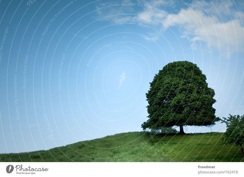 30 - alt wie ein baum Natur Himmel Baum grün Sommer ruhig Wiese Berge u. Gebirge Hintergrundbild groß Macht Wachstum Frieden Kitsch Schweiz