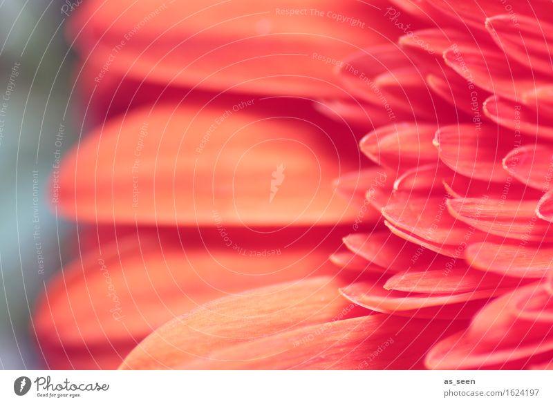 Florale Struktur Lifestyle elegant schön Wellness harmonisch Meditation Duft Garten Valentinstag Muttertag Gartenarbeit Floristik Umwelt Natur Pflanze Frühling