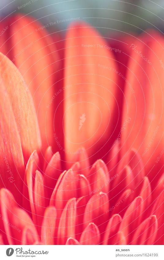 Blumenmuster Natur Pflanze schön Sommer Farbe rot Umwelt Frühling Blüte Lifestyle Garten Design orange Wachstum elegant