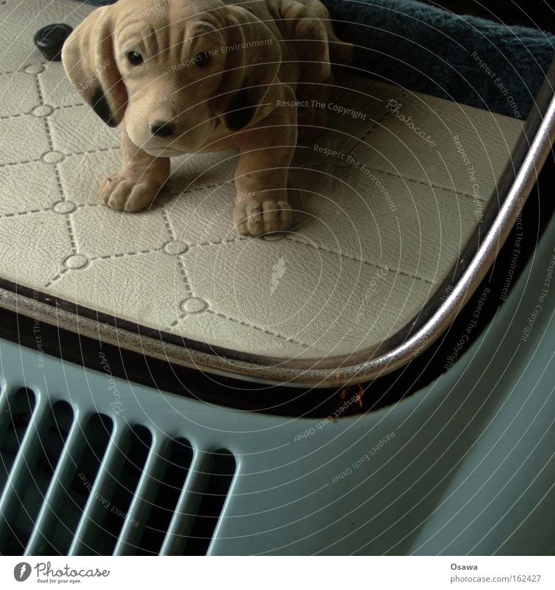 Wackeldackel Hund Tier Autofenster PKW retro Säugetier Fensterscheibe Scheibe Käfer KFZ Spießer Dackel Ablage Hutablage Heckscheibe