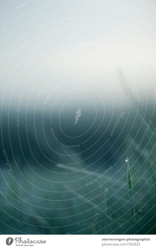 halt suchend grün Einsamkeit kalt Wiese Gras Frühling Nebel Wassertropfen frisch festhalten Tau Halm Halt Schwäche