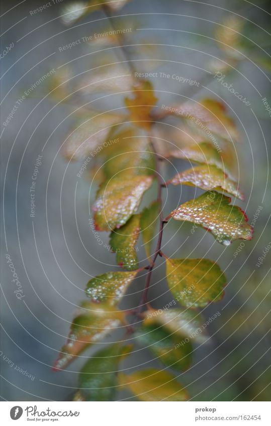 Zarter Pflanze Baum Sträucher Blatt Ast Raureif Schnee kalt zart fein Natur Tiefenschärfe einfach Vertrauen Schwäche