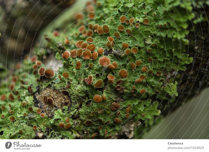 Baumflechten Ferien & Urlaub & Reisen alt Pflanze grün Umwelt Leben außergewöhnlich braun Wachstum wandern ästhetisch Klima Abenteuer Wandel & Veränderung