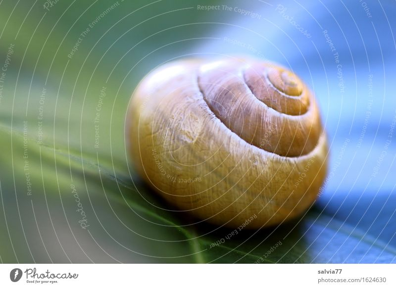 warm und kalt Natur Pflanze Blatt Tier Schnecke Schneckenhaus 1 ästhetisch rund blau gelb grün Design ruhig Schutz Spirale Symmetrie Strukturen & Formen Linie