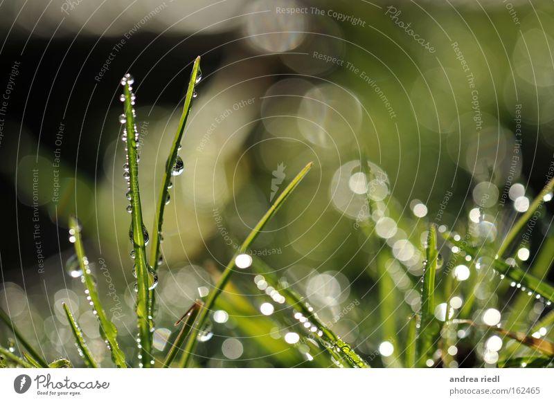 Sonnenregengras Natur Pflanze Gras Regen Wassertropfen Licht Erde Beleuchtung fruchtbar glänzend grün Wachstum Frühling Wiese Makroaufnahme Nahaufnahme