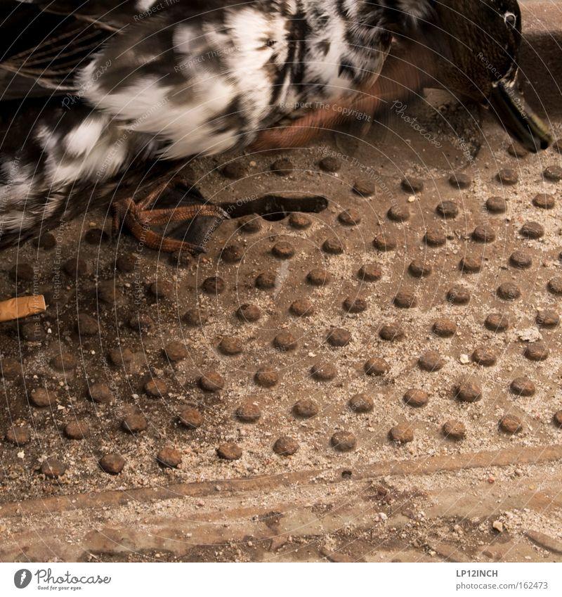 Hafen-Ente Farbfoto Außenaufnahme Nahaufnahme Textfreiraum Mitte Tag Bewegungsunschärfe Ernährung Umwelt Tier Vogel 1 Beton Reinigen Laster Leben Reinlichkeit