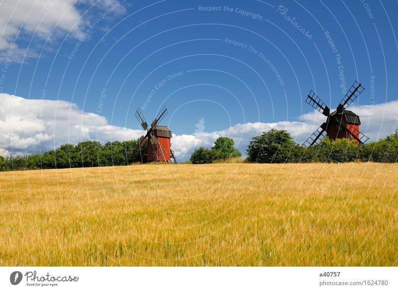 Windmühle Öland Sverige Schweden Hallig Oland Landschaft Kultur Sonne Natur berühmter Ort Architektur Ackerbau ländlich Himmel Hügel Skandinavien Blume Frühling