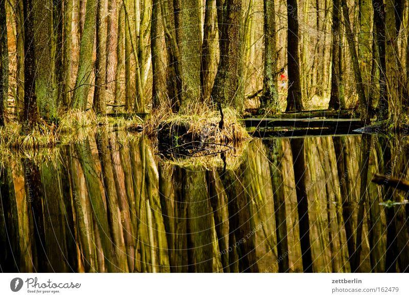 Briesetal Wald Baum Baumstamm Mischwald Laubwald Sumpf See Teich Wasser Reflexion & Spiegelung Natur Umweltschutz wandern Spaziergang Frühling urstromtal