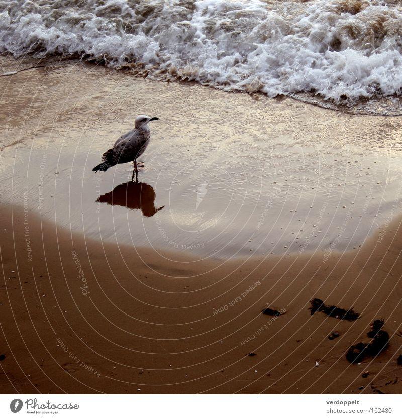 Natur Wasser Meer Tier Vogel Wellen Wetter