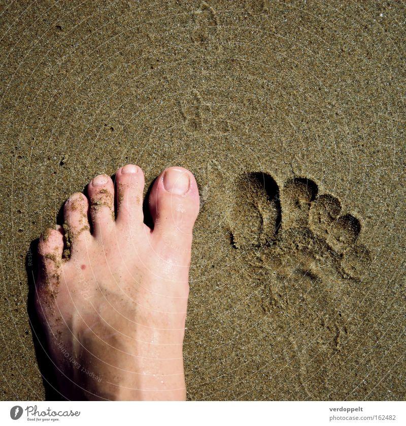 Mensch Meer Fuß Sand laufen Schilder & Markierungen Spaziergang Fußspur Korn Teile u. Stücke Zehen Hälfte Spuren Leberfleck Körperteile