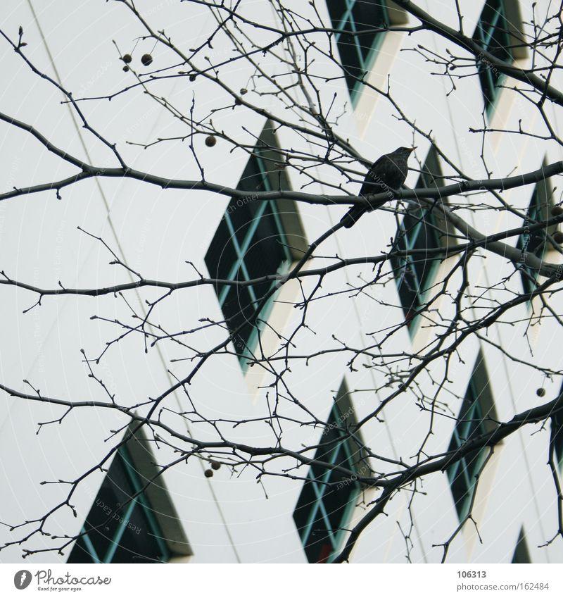 Fotonummer 117085 Baum Stadt Haus Fenster Vogel Wohnung Häusliches Leben Ast Lebewesen