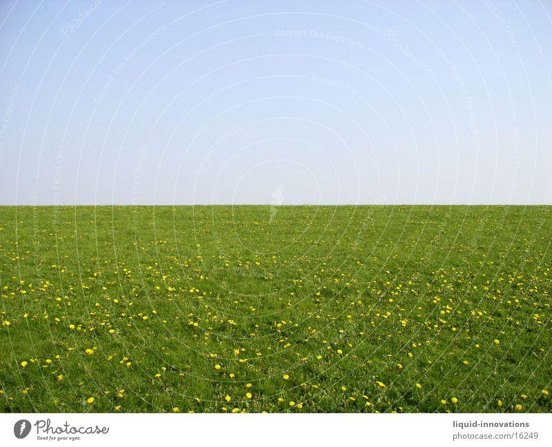 Deich Wiese grün Horizont Blumenwiese Himmel