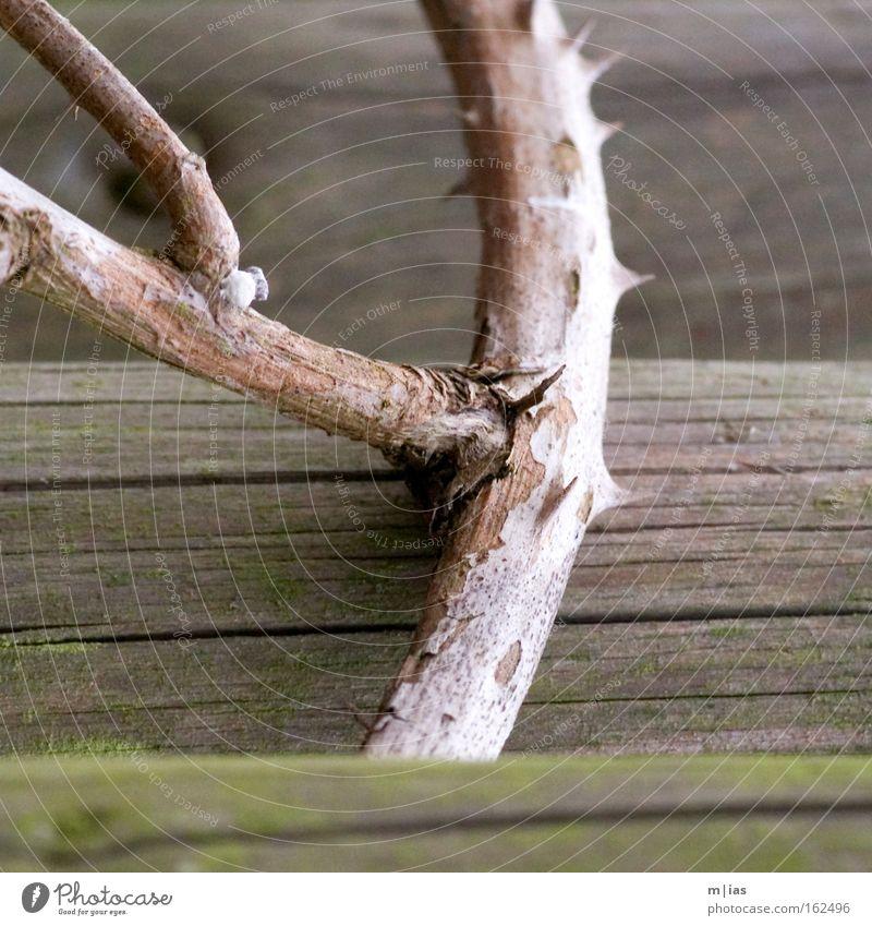 Y Natur Baum Herbst Traurigkeit Kraft wandern gefährlich bedrohlich Ast Vergänglichkeit Vergangenheit Zaun vertikal Knoten Stachel Dorn