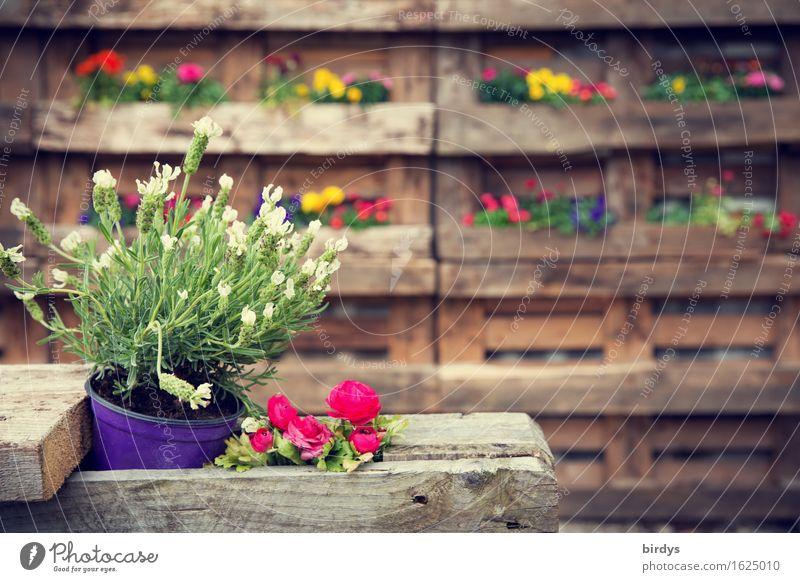 selfmade Deko Lifestyle Stil Häusliches Leben Pflanze Blüte Topfpflanze Blume Blumenkasten Blumentopf Blühend Duft ästhetisch außergewöhnlich Freundlichkeit