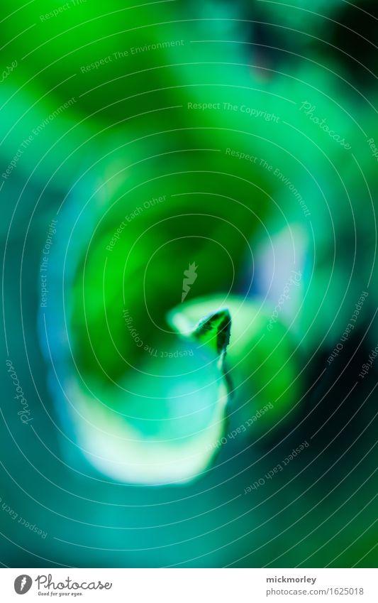 Am Anfang war das Blatt Wellness Leben harmonisch Wohlgefühl Zufriedenheit Sinnesorgane Erholung ruhig Meditation Umwelt Natur Klima Pflanze Grünpflanze