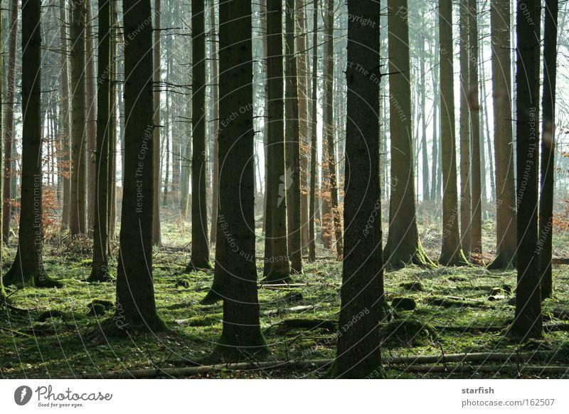 bäumig... Abenteuer Expedition Sommer Umwelt Natur Pflanze Erde Sonnenlicht Frühling Nebel Baum Gras Moos Grünpflanze Wald Holz träumen Traurigkeit braun grün