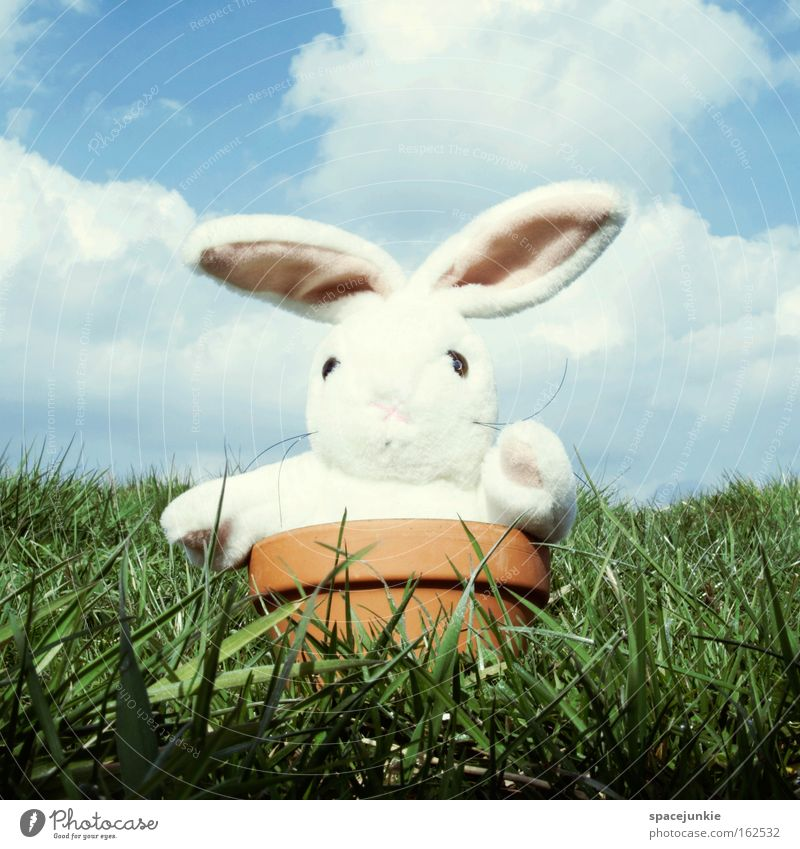 Easter Bunny comes around (2) Ostern Osterhase Hase & Kaninchen Feiertag Blumentopf Topf Wiese Gras Tier Stofftiere skurril lustig Freude