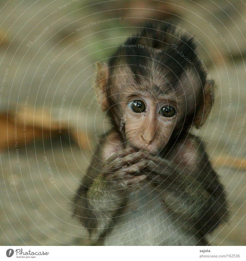 affenbaby Auge Ernährung Einsamkeit Tier Traurigkeit braun klein Tiergesicht Asien Wald Außenaufnahme wild Sehnsucht Fell