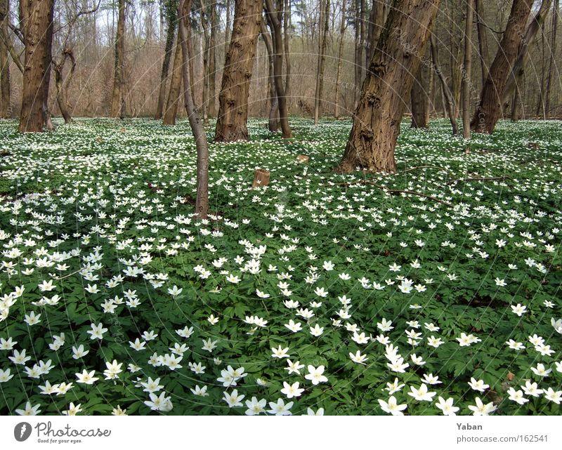 Im Märchenwald Natur grün Baum Pflanze Blume Wald Umwelt Wiese Frühling träumen natürlich wandern Wachstum leuchten fantastisch Blühend