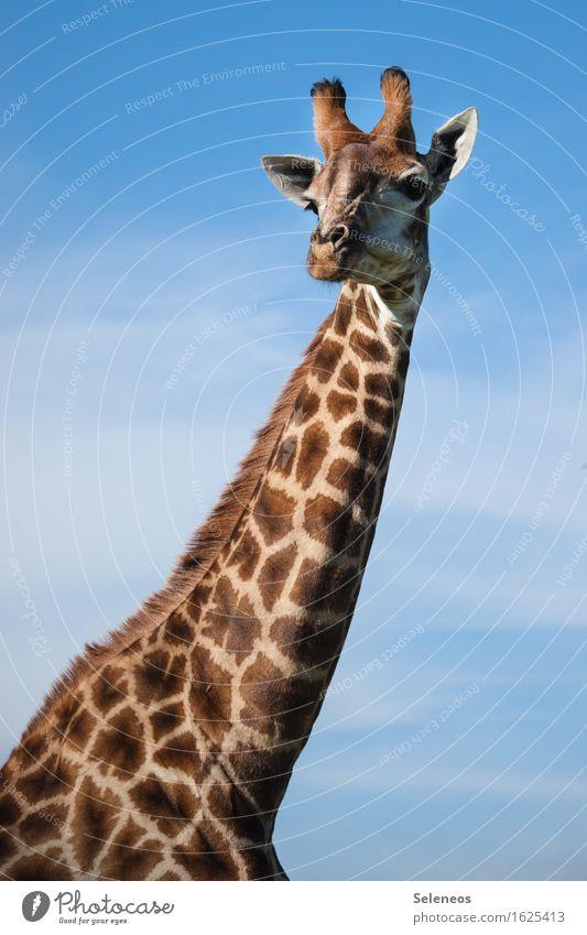 ich kann das Wochenende schon sehen Himmel Natur Ferien & Urlaub & Reisen Sommer Sonne Tier Ferne Umwelt Tourismus Wildtier Ausflug Fernweh Sommerurlaub