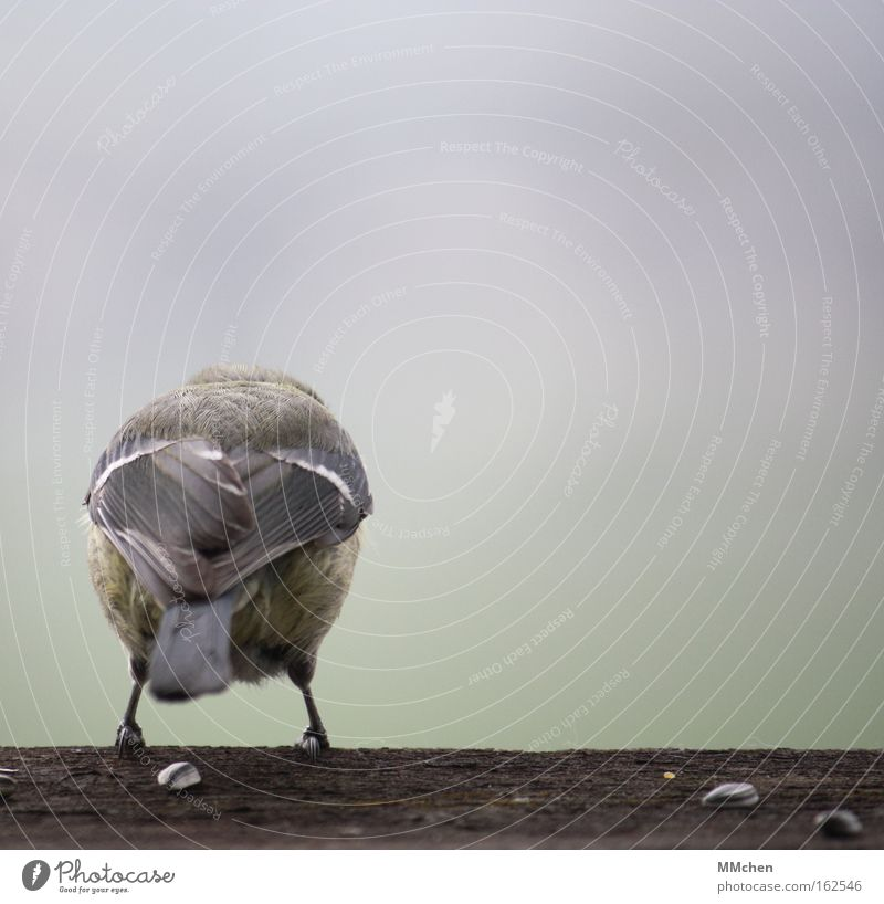 Höhenangst springen Holz Vogel Angst warten Sicherheit Rücken Feder Panik Am Rand Abheben Angsthase zögern Feigheit startbereit