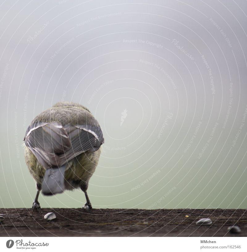 Höhenangst Vogel Holz Rücken Feder springen startbereit warten Am Rand Feigheit Angsthase zögern Panik Sicherheit trau dich! auf`m sprung