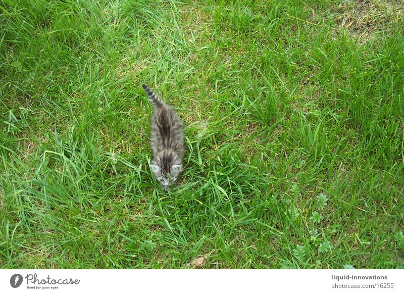 Tiger Wiese Katze Diebstahl Vogelperspektive Verkehr