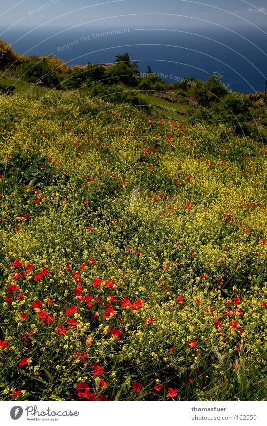 Osterspaziergang schön Meer Freude gelb Glück Frühling Mohn Blumenwiese