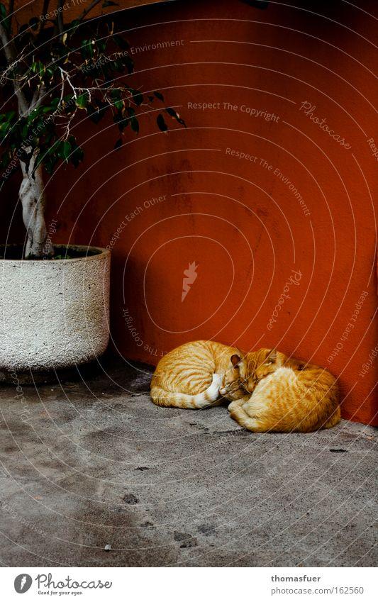 Siesta rot Sommer Freude ruhig Erholung Katze Wärme Zufriedenheit Sicherheit Pause Warmherzigkeit Idylle Sonnenbad Säugetier Intimität rothaarig