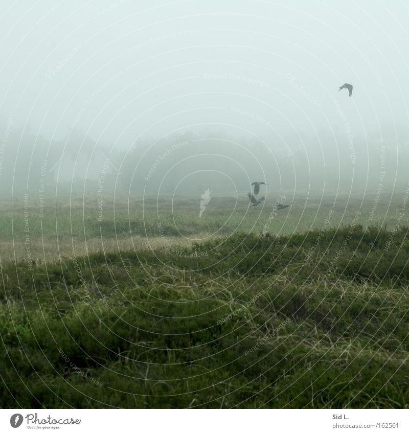 Dünenheide auf Hiddensee Haus Vogel Nebel fliegen Insel Frieden Wind Windstille Krähe flüchten Heidekrautgewächse
